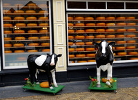 Cheese Store Display - The Hague