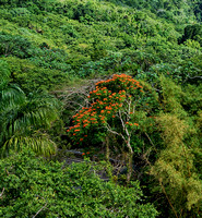 El Yunque National Forest 4
